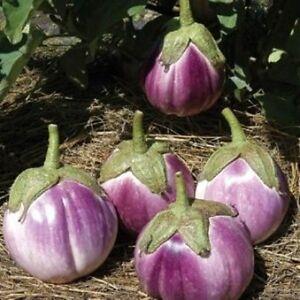 10 auberginen rotonda bianca sfumata di rosa s mereien. Black Bedroom Furniture Sets. Home Design Ideas