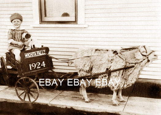 Goat Cart Deals On 1001 Blocks