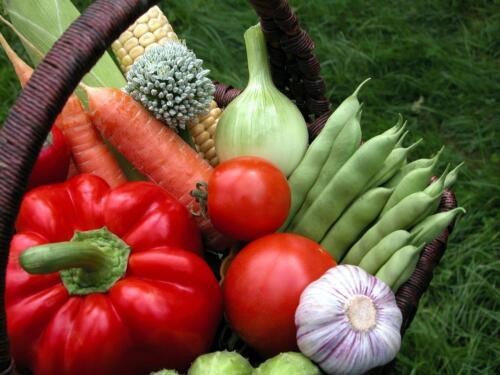 25 VARIETIES-NON HYBRID NON GMO HEIRLOOM SURVIVAL GARDEN SEED BANK SKU25VA in Home & Garden, Yard, Garden & Outdoor Living, Flowers, Trees & Plants | eBay