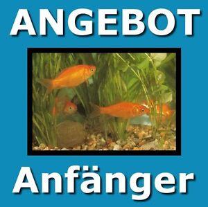 3-Ratgeber-fuer-Einsteiger-Das-Aquarium-Goldfische-und-Farbkarpfen-Goldfische