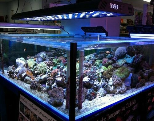"36"" Remote Program LED Light Saltwater live Coral Aquarium Reef Fish Acan Zoo in Pet Supplies, Aquarium & Fish, Lighting 