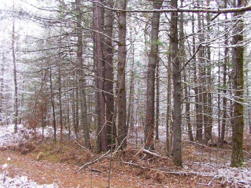 5 ACRES - BEAR LAKE TOWNSHIP - KALKASKA COUNTY - MICHIGAN - MI LAND LOT in Real Estate, Land | eBay