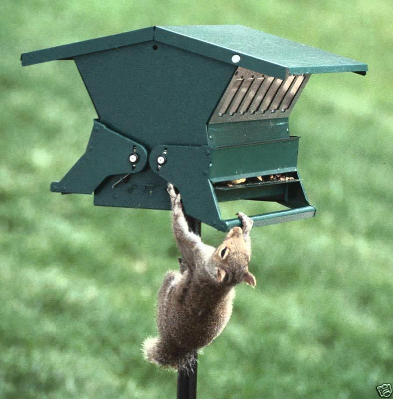 Absolute II Squirrel Proof Bird Feeder Heritage Farms 7536