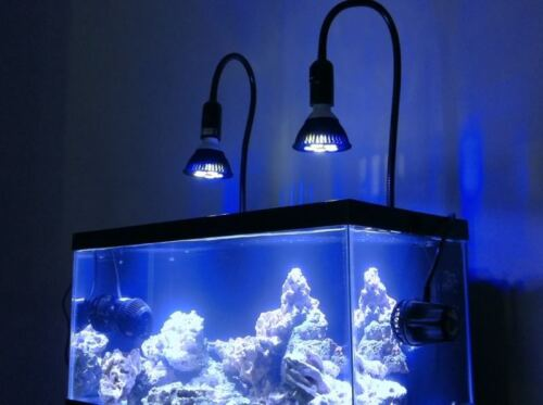 Aquarium LED PAR38 Bulb 15W Actinic Blue/10,000K/14,000K White W/ Clamp Mount in Pet Supplies, Aquarium & Fish, Lighting | eBay