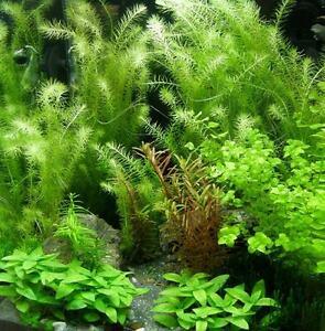 Aquarium-Set-40-60-l-Pflanzen-Kies-Deko-V