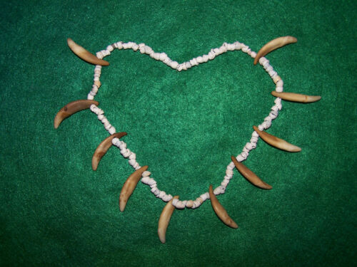 BEAUTIFUL HISTORIC SHELL BEADS with DRILLED CANINE TEETH NECKLACE in Collectibles, Cultures & Ethnicities, Native American: US | eBay