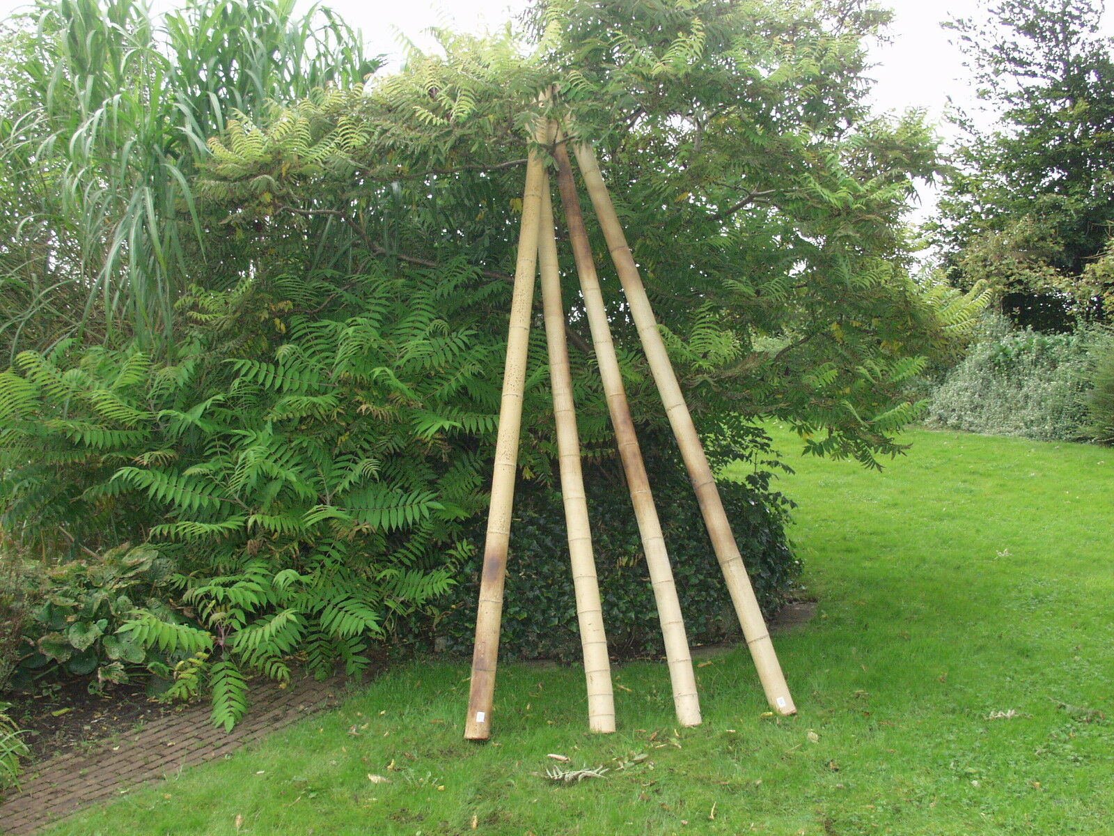 bamboo poles for screen anji nature 90 cm 7 up to 8 cm ebay. Black Bedroom Furniture Sets. Home Design Ideas