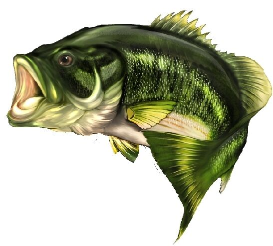 Largemouth Bass Fishing Clip Art - More information