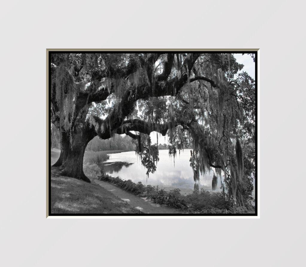 Black White Oak Tree Home Interior Decor Wall Art Matted Picture