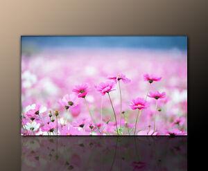 designbilder flieder lavendel farbe sch n feld bild. Black Bedroom Furniture Sets. Home Design Ideas