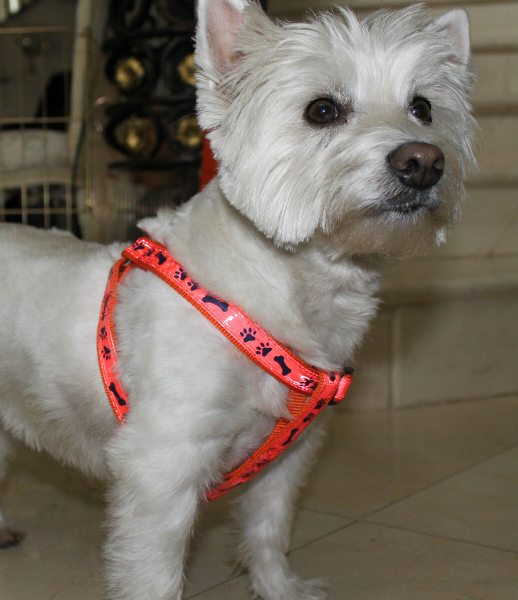 Dog Harness Easy Step in for Medium to Large Dogs w Bone Paw Print High Quality