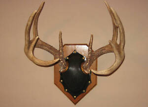 Details about deer antler mount plaque kit taxidermy