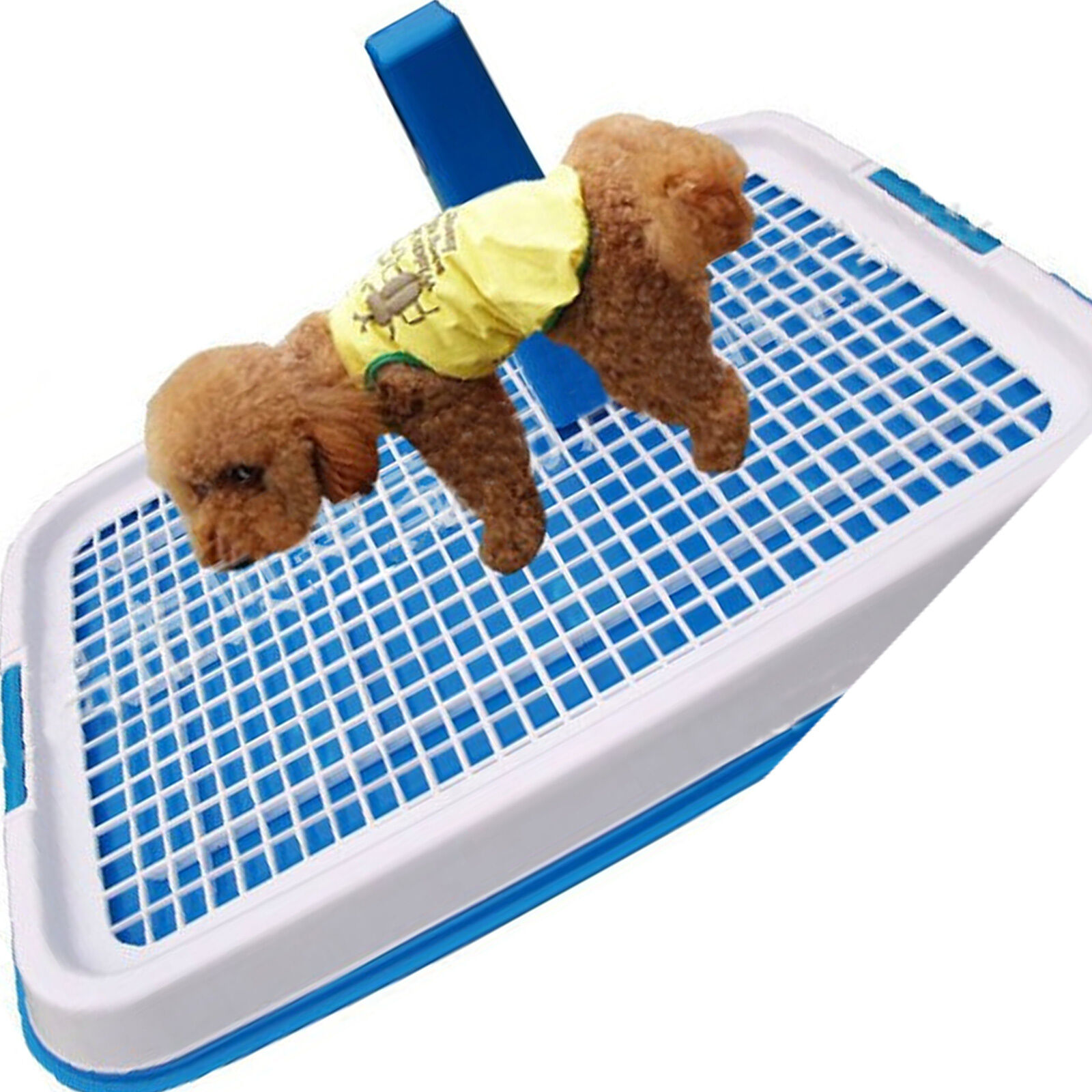 Training A Puppy: Next Topic Potty Training Dogs On Pee Pads