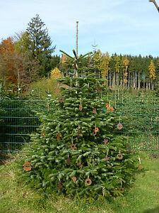 Edelrost christbaumschmuck gartendeko eisen rost for Gartendeko rost krone