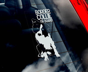 English-Border-Collie-Car-Sticker-Sign-n-Collar