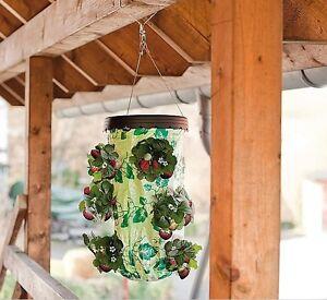 erdbeerampel erdbeeren erdbeer ampel f r balkon. Black Bedroom Furniture Sets. Home Design Ideas