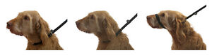 Figure-of-8-Dog-Lead-PROBABLY-THE-BEST-DOG-LEAD-IN-THE-WORLD-3-in-1-dog-lead