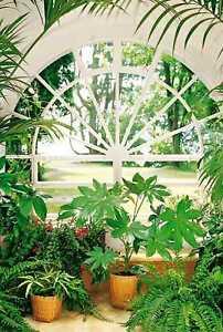 fototapete wintergarten 183x254 palmen fenster park. Black Bedroom Furniture Sets. Home Design Ideas