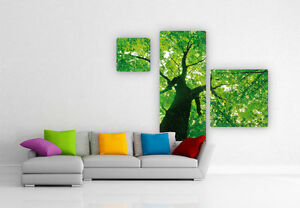 glasbild under the trees 3 teilig bild baum natur wald deko wohnzimmer ebay. Black Bedroom Furniture Sets. Home Design Ideas