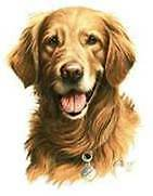 GOLDEN RETRIEVER DOG Large Head  Fabric  Quilt and Sew