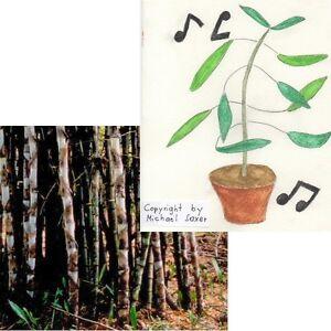 gut geeignet f r drinnen telegraphen pflanze und eisen bambus zum sonderpreis ebay. Black Bedroom Furniture Sets. Home Design Ideas
