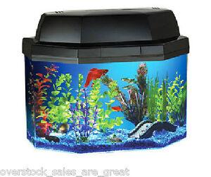 5 gallon fish tank with filter glofish 3 5 gallon for 5 gallon fish tank filter