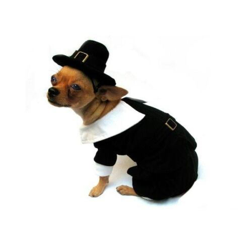 Pilgrim Costume For Large Dogs