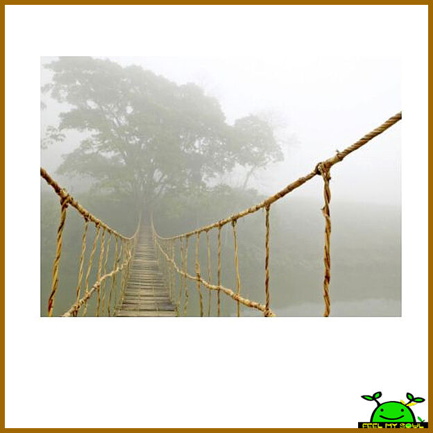 ikea jungle journey wall decor picture poster photo canvas. Black Bedroom Furniture Sets. Home Design Ideas