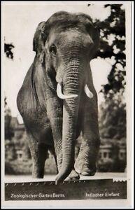 Elefant zoologischer garten berlin zoo tierpark elephant tiere tier ak