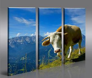 K he v2 3 bilder kuh foto landschaft tier auf leinwand - Kuh bilder auf leinwand ...
