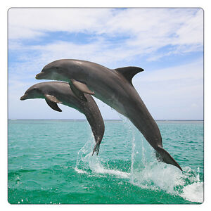 k hlschrank magnet zwei delfine im wasser gro e. Black Bedroom Furniture Sets. Home Design Ideas