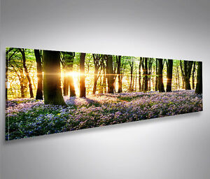 lavendel im wald panorama format bild auf leinwand poster. Black Bedroom Furniture Sets. Home Design Ideas