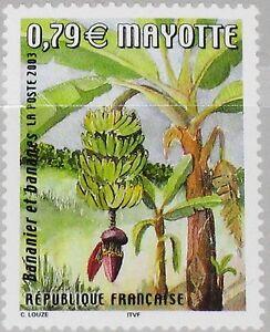 mayotte 2003 140 185 banana tree bananenbaum flora baum. Black Bedroom Furniture Sets. Home Design Ideas