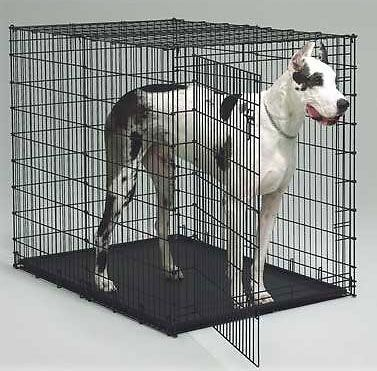 MIDWEST 54 INCH DOG CRATE WITH PAN BIG DOG CRATE 1154U in Pet Supplies, Dog Supplies, Crates | eBay