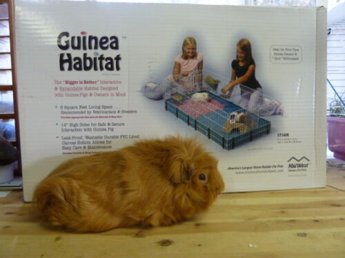 Midwest Guinea Pig Habitat Brand New Guinea Pig Cage in Pet Supplies, Small Animal Supplies | eBay