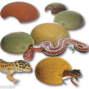 schlangen farben
