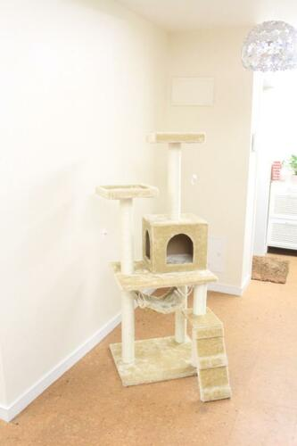 "New Beige 57"" Cat Tree Condo Furniture Scratch Post Pet House 5777 in Pet Supplies, Cat Supplies, Furniture & Scratchers 