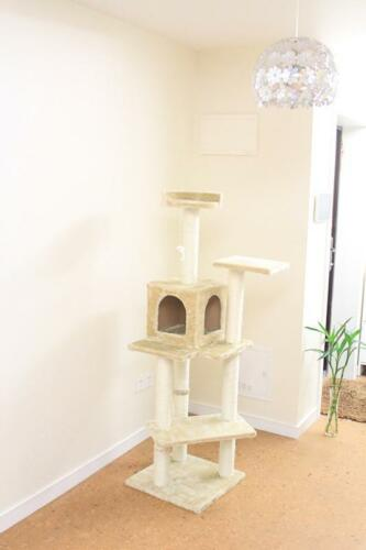 "New Beige 60"" Cat Tree Condo Furniture Scratch Post Pet House in Pet Supplies, Cat Supplies, Furniture & Scratchers 