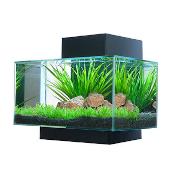 New Fluval Edge Aquarium Black in Box 6 Gal in Pet Supplies, Aquarium & Fish, Aquariums | eBay