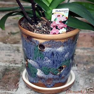 orchideentopf aus keramik orchideen topf blumentopf. Black Bedroom Furniture Sets. Home Design Ideas
