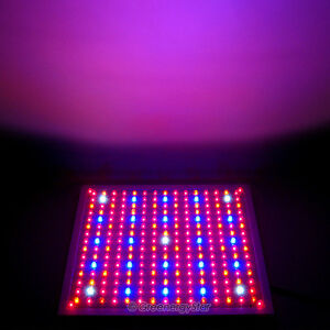 Red Blue OrangeWhite Hydroponic LED Grow Light Lamp 18 watt 225/120/110V New 229