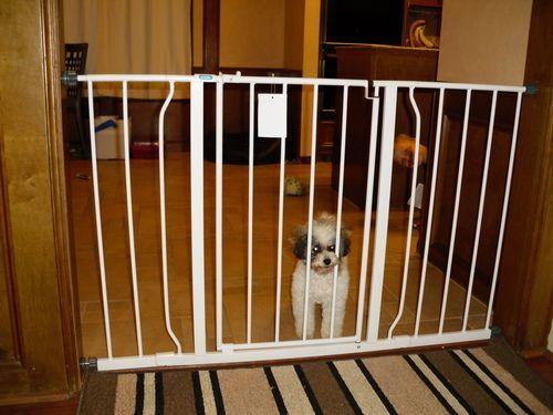 Regalo Extra Super Wide Walk thru Baby Pet Child Safety Gate