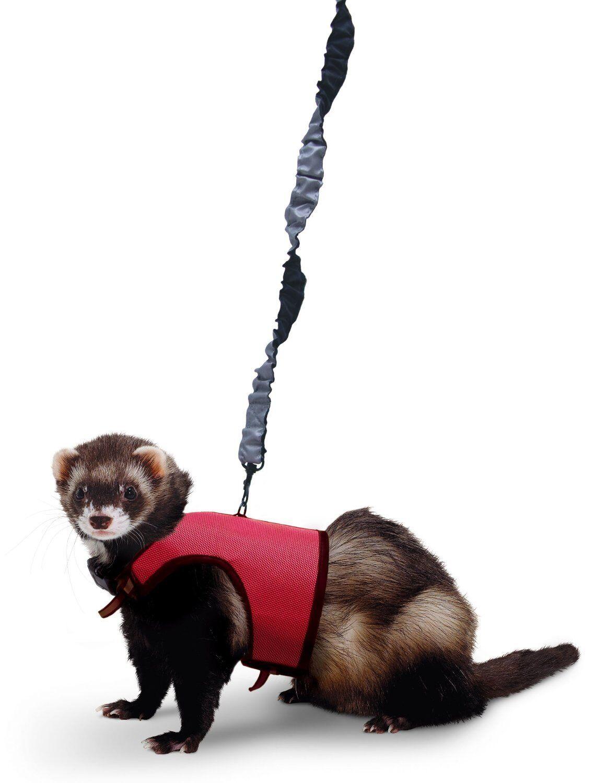 Small Animal Reptiles And Amphibian Habitats: SUPER PET Nylon Comfort Harness Plus Stretchy Leash For