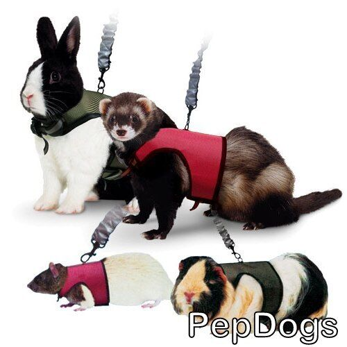 SUPER PET Nylon Comfort Harness plus Stretchy Leash for Small Animal Travel Walk in Pet Supplies, Small Animal Supplies | eBay