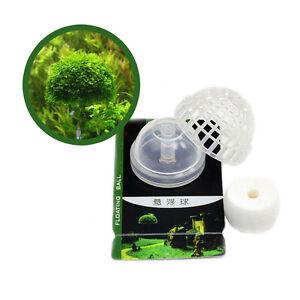 schwebendes moos ufo floating ball moss dome aquarium aquascaping deko ebay. Black Bedroom Furniture Sets. Home Design Ideas