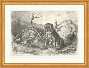 Beim todten hirsch beckmann tiere jagd geweih wald holzstich e 7423