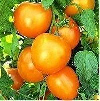 TOMATE ORO (delicioso ) 100 Semillas Seeds