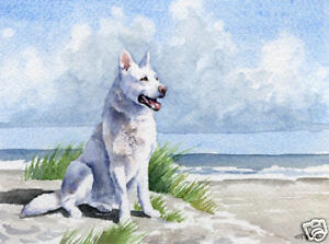 White German Shepherd Painting Oversized Art Print DJR | eBay