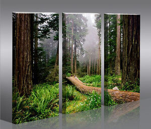 wald v2 3p bild bilder landschaftsbilder auf leinwand wandbild poster ebay. Black Bedroom Furniture Sets. Home Design Ideas