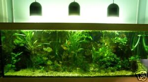 wasserpflanzen set f r brackwasser aquarium 200 300 l ebay. Black Bedroom Furniture Sets. Home Design Ideas